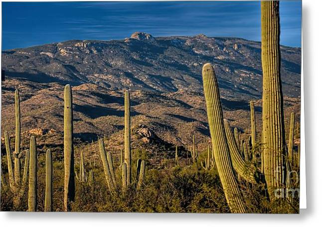 Rincon Greeting Cards - Arizona Thirst for Water Greeting Card by Henry Kowalski