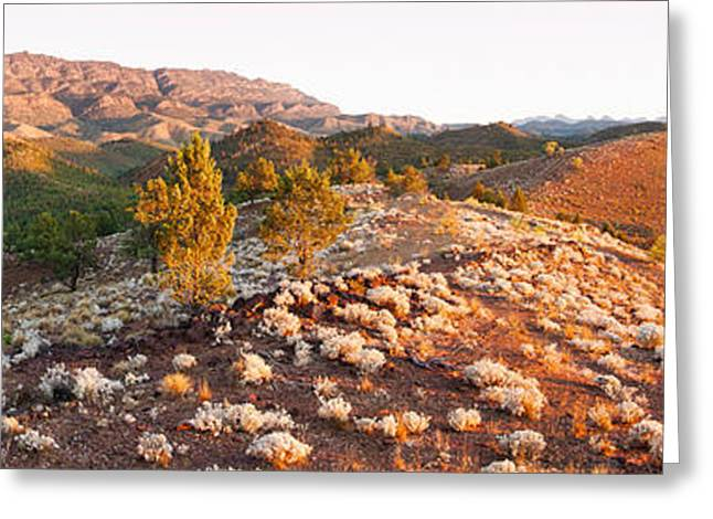 Hill Station Greeting Cards - Arkaba Station At Sunset, Flinders Greeting Card by Panoramic Images