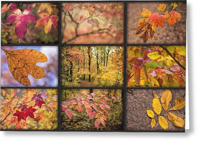 Arkansas Greeting Cards - Arkansas Autumn Greeting Card by Bonnie Barry