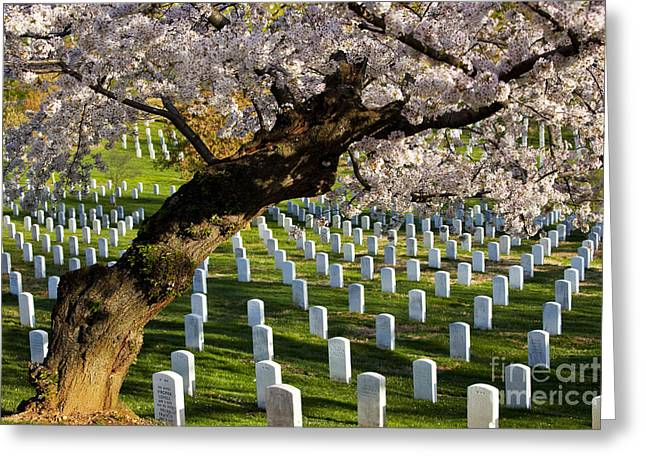 Arlington Photographs Greeting Cards - Arlington National Cemetary Greeting Card by Brian Jannsen