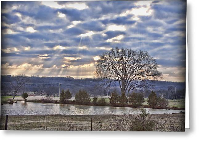 Franklin Farm Greeting Cards - Arno Road Tree Greeting Card by Pic