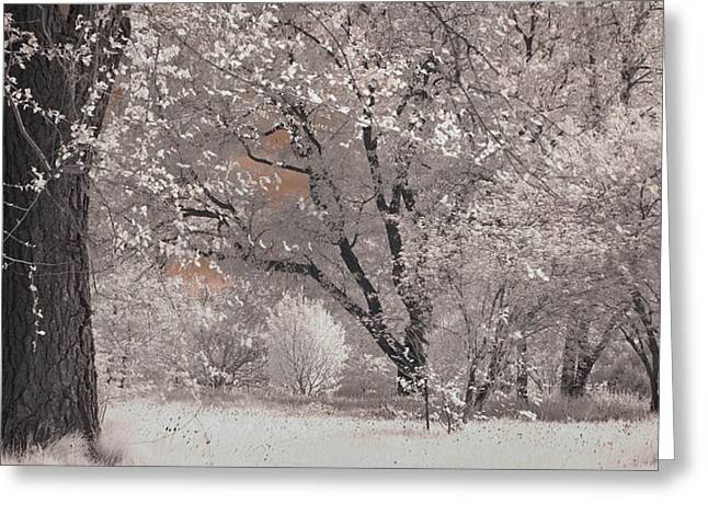 Nature Scene Greeting Cards - Arnold Arboretum in Infrared Greeting Card by Joann Vitali