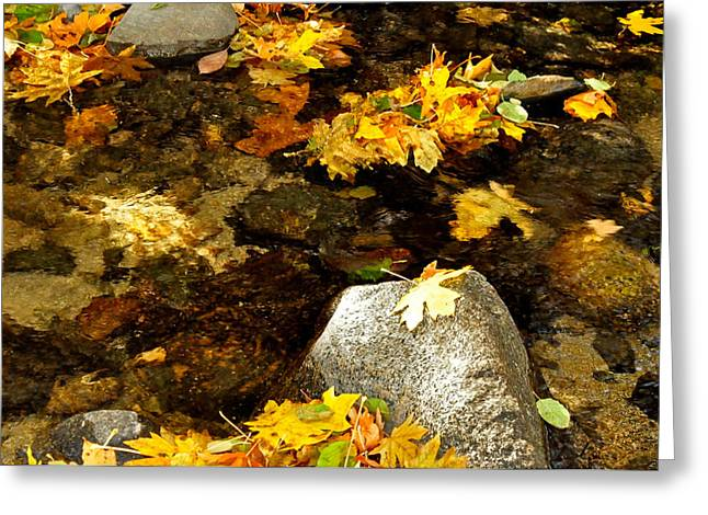 Black Rock Yellow Leaves Water Greeting Cards - Around And About In My Neck Of The Woods Series 14 Greeting Card by Teri Schuster