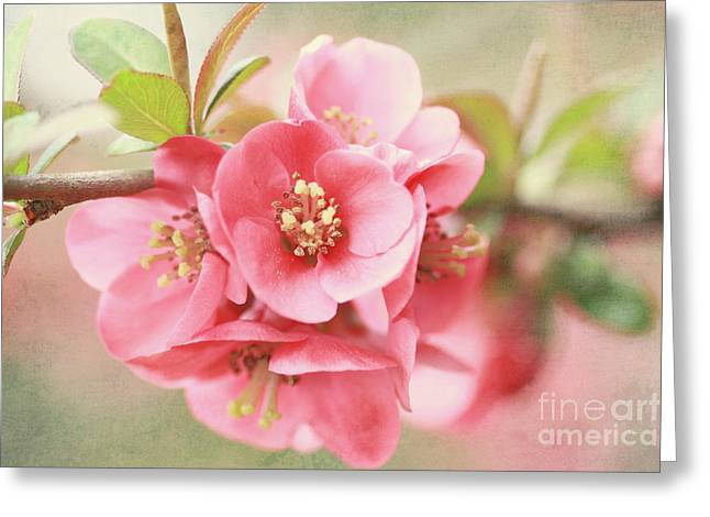 Quince Greeting Cards - Around The Corner Greeting Card by Sylvia Cook
