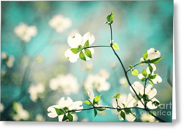 Floral Photos Greeting Cards - Arouse Greeting Card by Kim Fearheiley