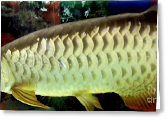 Gold Buyer Greeting Cards - Arowana Tropical Fish 2 Greeting Card by Gail Matthews