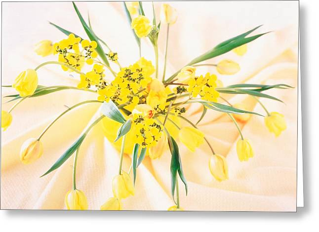 Yellow Flower Pot Greeting Cards - Arranged Yellow Flowers Greeting Card by Panoramic Images