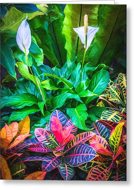 Exotic Greeting Cards - Arrangement of Croton and Spath Greeting Card by Duane Miller