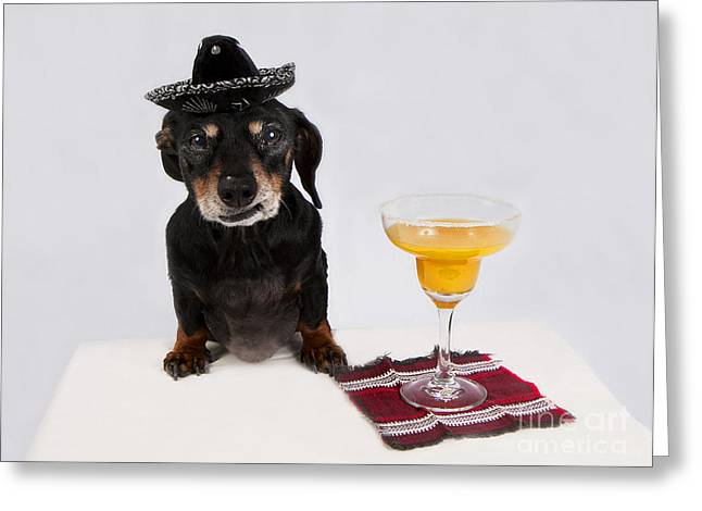Black And Tan Dachshund Greeting Cards - Arriba Arriba Greeting Card by Denise Oldridge