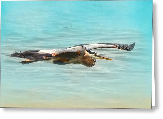 Arrival - Blue Heron - Wildlife Greeting Card by Jai Johnson