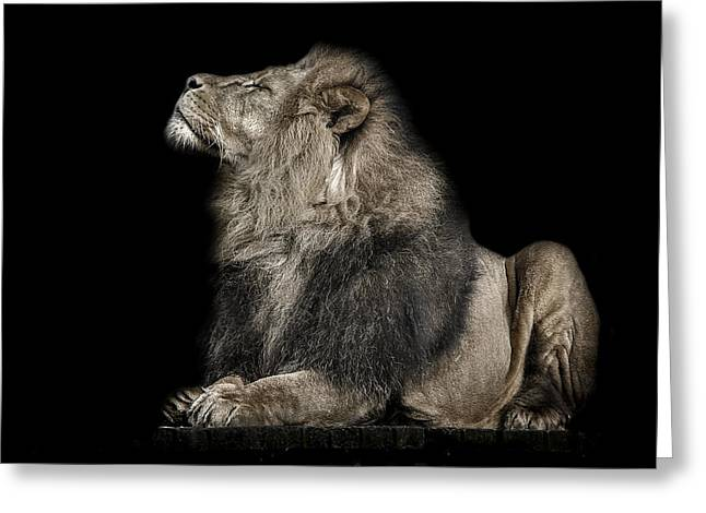 Lions Photographs Greeting Cards - Arrogance Greeting Card by Paul Neville