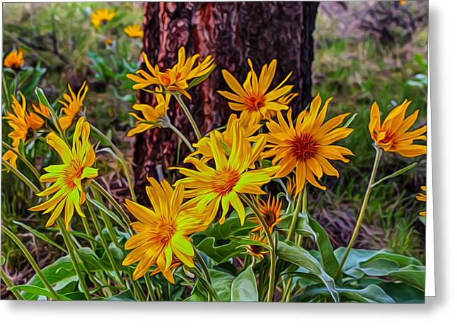 Pateros Greeting Cards - Arrowleaf Balsamroot Greeting Card by Omaste Witkowski