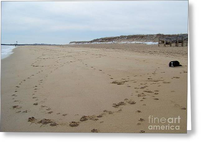 Beauty Mark Greeting Cards - Border Collie Leaves Her Mark On A Local Beach Greeting Card by Eunice Miller