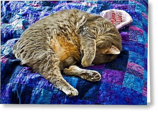 Domestic Short Hair Cat Greeting Cards - Cat Nap Greeting Card by Tim Buisman