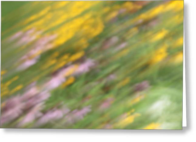 Abstracted Coneflowers Greeting Cards - Art of Floral Movement Abstract - Dancing Healing flowers - Echinacea and Yellow Coneflowers Greeting Card by Alex Khomoutov