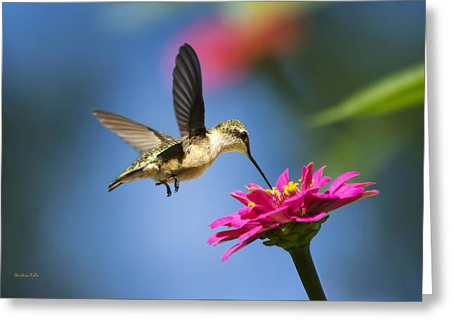 Ruby Throated Hummingbird Greeting Cards - Art of Hummingbird Flight Greeting Card by Christina Rollo