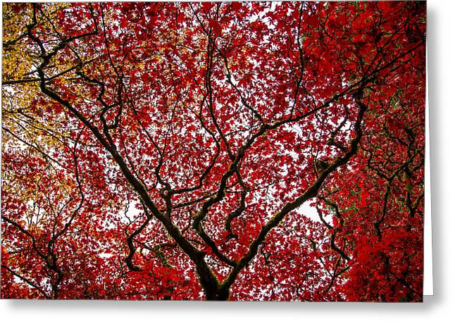 Victoria Johns Greeting Cards - Arterial Fall Greeting Card by John Daly