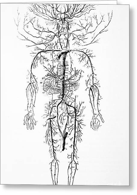 Circulatory System Greeting Cards - Arterial System, 18th Century Greeting Card by Spl