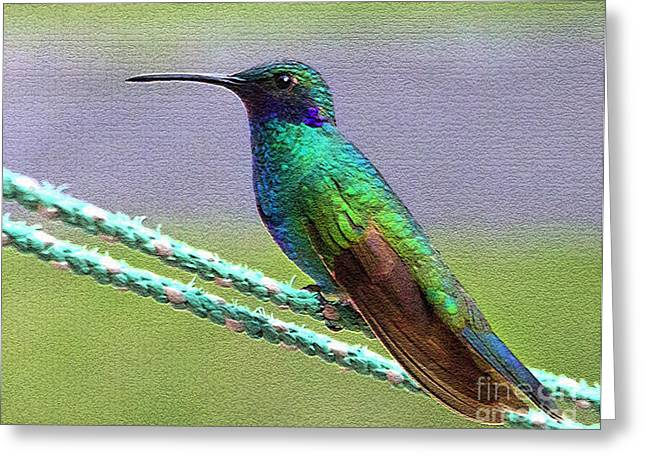 Hovering Greeting Cards - Artful Hummingbird Named Tom Thumb Greeting Card by Al Bourassa
