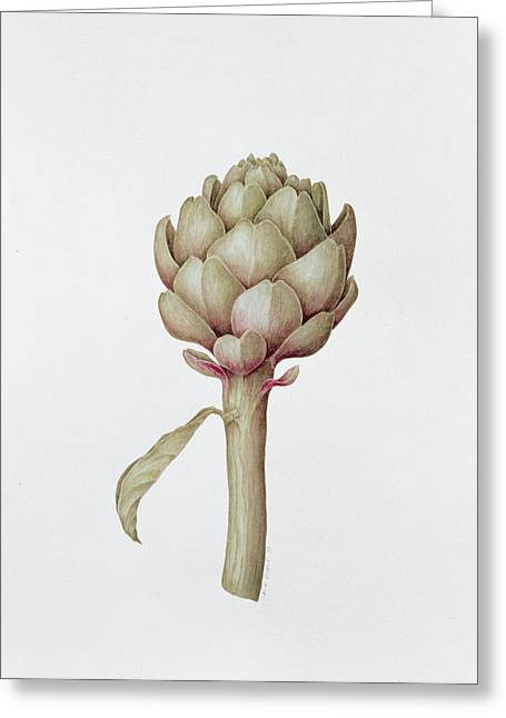 Roots Paintings Greeting Cards - Artichoke Greeting Card by Diana Everett