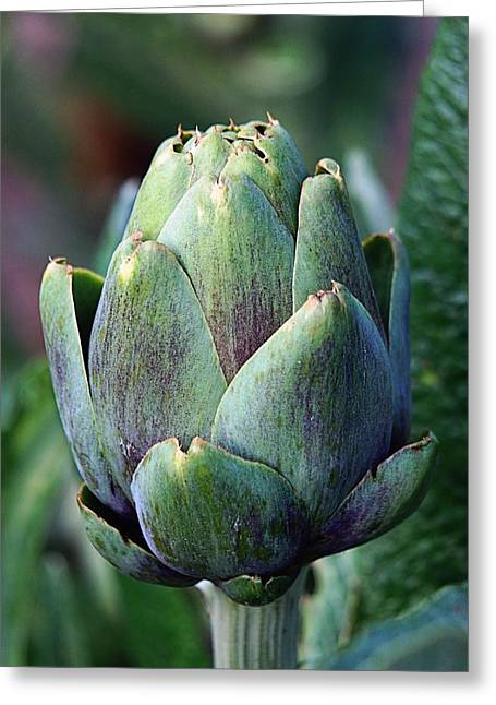 Farm Stand Greeting Cards - Artichoke Greeting Card by Jenny Hudson