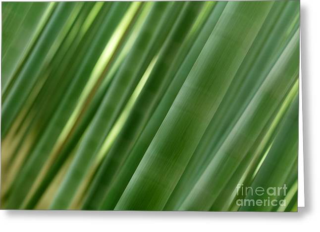 Culm Greeting Cards - Artistic abstract of bamboo forest culms Greeting Card by Oleksiy Maksymenko