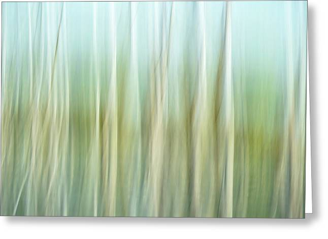 Artistic Abstract Of Trees Greeting Card by Rona Schwarz
