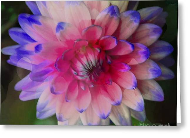 Struckle Greeting Cards - Artistic Dahlia Greeting Card by Kathleen Struckle