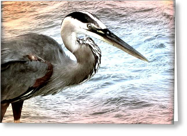 Water Fowl Greeting Cards - Artistic Great Blue Heron Greeting Card by Pat Exum