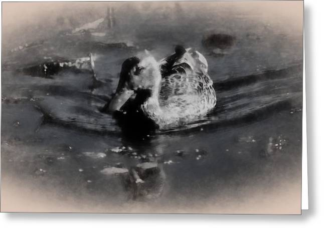 Nature Phots Greeting Cards - Artistic monochrome presentation of femail duck- female mallard swimming  Greeting Card by Leif Sohlman