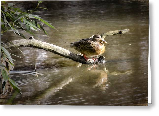 Trees Reflecting In Creek Greeting Cards - Artistic paintiry Female Mallard Duck Sitting On A Log Near And Reflected In Water Greeting Card by Leif Sohlman