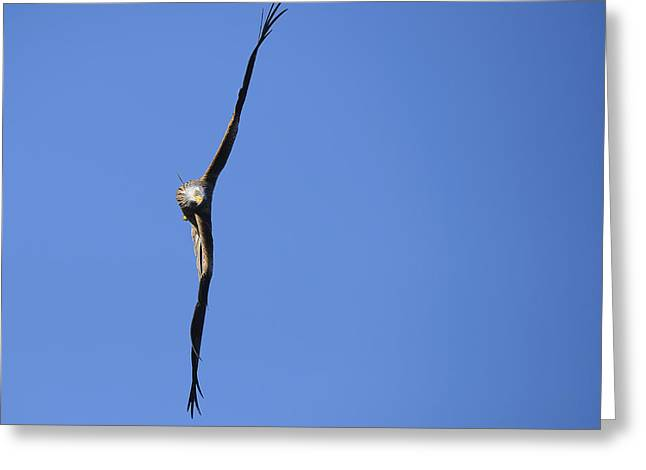 Red Kite Greeting Cards - Artistic Red Kite Greeting Card by Andy-Kim Moeller