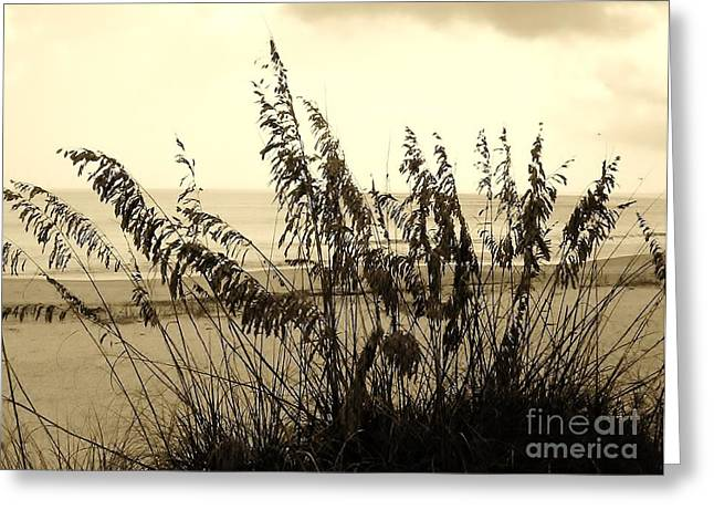 Best Ocean Photography Greeting Cards - Artistic - Sea - Oats Greeting Card by D Hackett