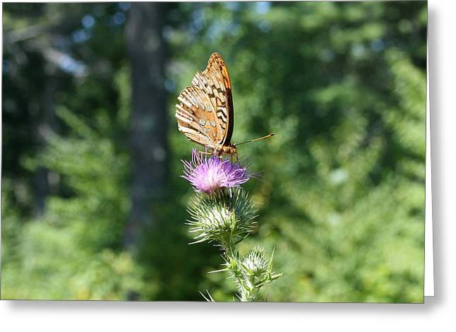 Wildflower Photography Greeting Cards - Artistic Butterfly Stand  Greeting Card by Neal  Eslinger