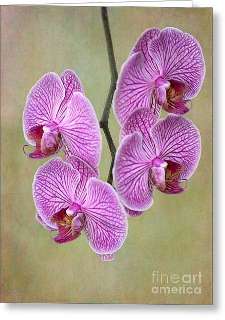 Florida Flowers Greeting Cards - Artsy Phalaenopsis Orchids Greeting Card by Sabrina L Ryan