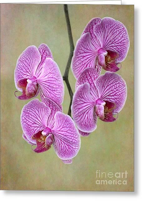 Artsy Phalaenopsis Orchids Greeting Card by Sabrina L Ryan