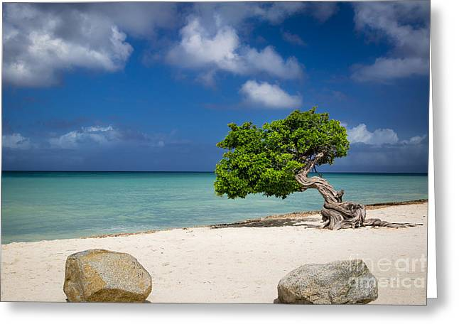 Resolve Greeting Cards - Aruba Beach Tree Greeting Card by Brian Jannsen