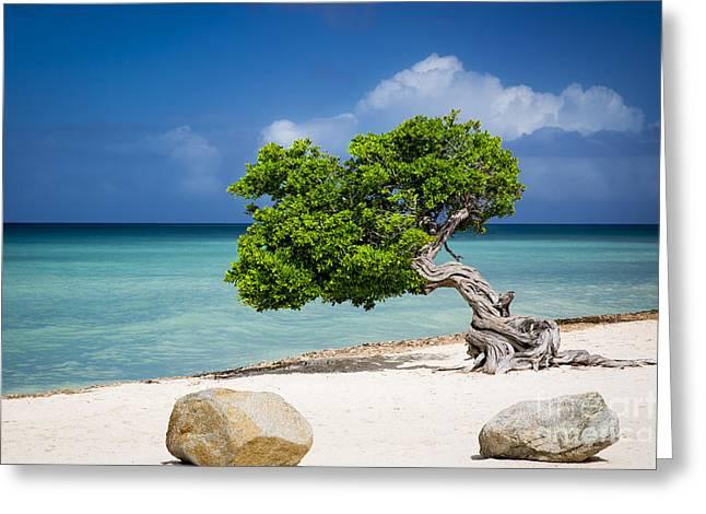 Resolve Greeting Cards - Aruba Tree Greeting Card by Brian Jannsen