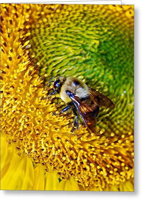 Randall Templeton Greeting Cards - As busy as a bee. Greeting Card by Randall Templeton