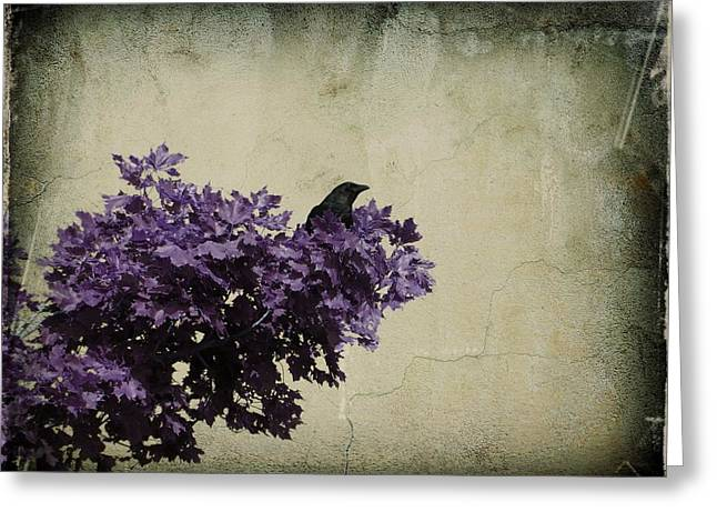 Common Crows Greeting Cards - As His Day Goes By Greeting Card by Gothicolors Donna Snyder