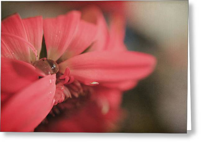 Dew Digital Art Greeting Cards - As I Sit by the Window Greeting Card by Laurie Search