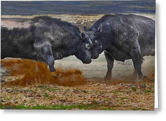 Cattle Greeting Cards - As real as it gets Greeting Card by Amanda Smith