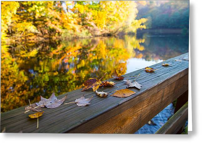 Colors Of Autumn Greeting Cards - As The Leaves Fall Greeting Card by Karol  Livote