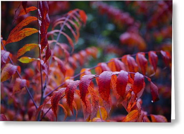 Red Leaves Greeting Cards - As The Leaves Turn  Greeting Card by Saija  Lehtonen