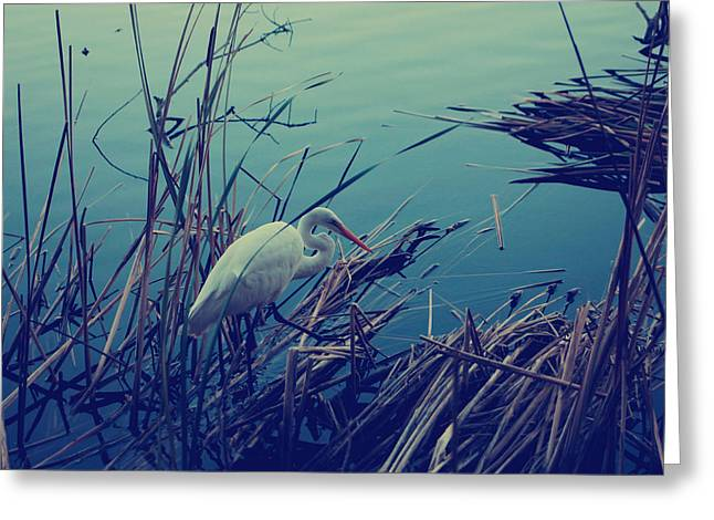 Cattails Greeting Cards - As the Light Fades Greeting Card by Laurie Search