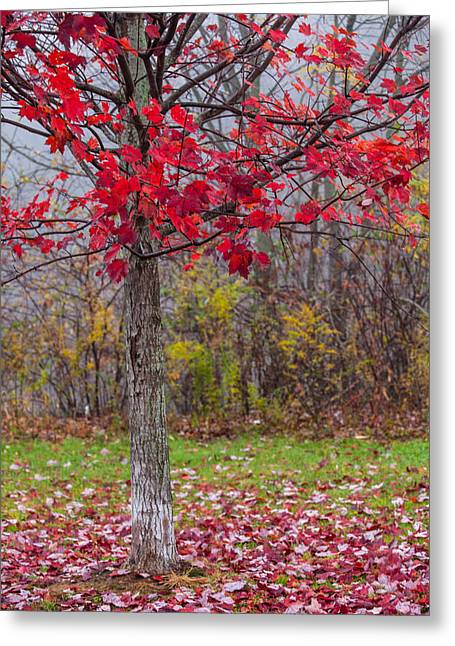 Autumn Scenes Greeting Cards - As The Red Falls Greeting Card by Karol  Livote