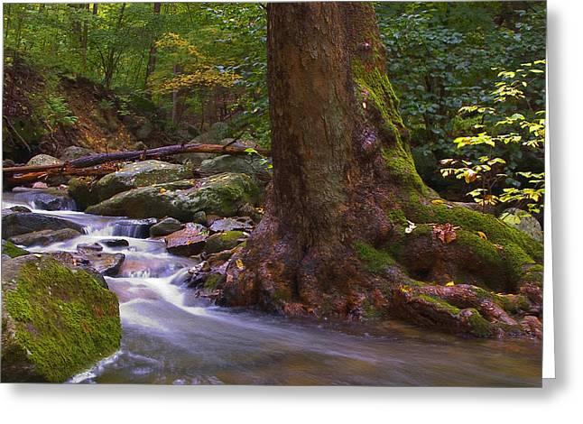 As The River Runs Greeting Card by Karol Livote