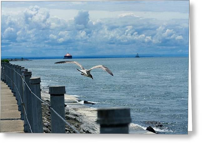 Flying Seagull Digital Art Greeting Cards - As The Seagull Flies Greeting Card by Gothicolors Donna Snyder
