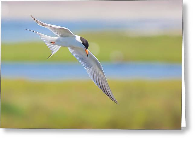 Tern Digital Art Greeting Cards - As the World Terns Greeting Card by Monique Dao