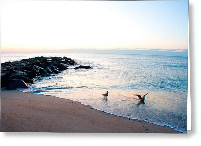 Asbury Seagulls Greeting Card by Jon Emery